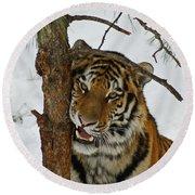 Tiger 3 Round Beach Towel