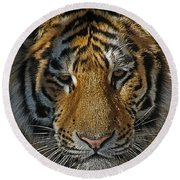 Tiger 5 Posterized Round Beach Towel