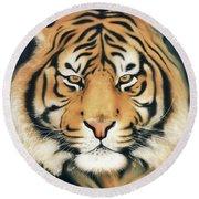 Tiger At Midnight Round Beach Towel