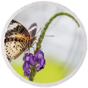 Tiger Butterfly Perched On A Flower Round Beach Towel