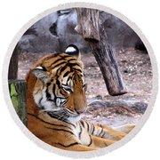 Tiger Round Beach Towel