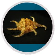 Tiger Conch Seashell Round Beach Towel