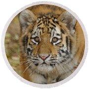 Tiger Cub Round Beach Towel