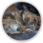 Tiger Dog And The Buskers Round Beach Towel