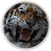 Tiger Faces 2 Round Beach Towel