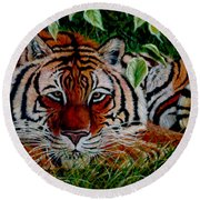 Tiger In Jungle Round Beach Towel