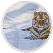 Tiger In The Snow Round Beach Towel