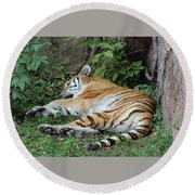 Tiger- Lincoln Park Zoo Round Beach Towel