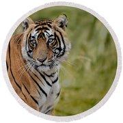 Tiger Look Round Beach Towel