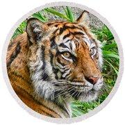 Tiger Portrait Round Beach Towel by Jennie Marie Schell