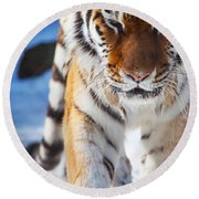 Tiger Strut Round Beach Towel