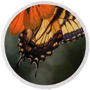 Tiger Swallowtail - 2 Round Beach Towel