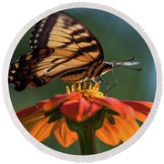 Tiger Swallowtail - 3 Round Beach Towel