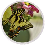 Tiger Swallowtail Butterfly On Begonia Bloom         June            Indiana Round Beach Towel