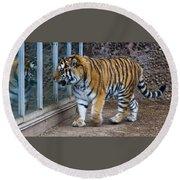 Tiger Territory 4 Round Beach Towel