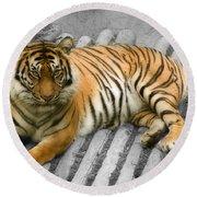 Tigers Look Round Beach Towel