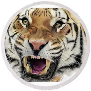 Tigers Pace Round Beach Towel