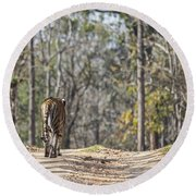 Tigress Walking Along A Track In Sal Forest Pench Tiger Reserve India Round Beach Towel