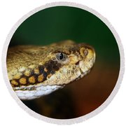 Timber Rattler Head On Round Beach Towel