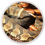 Timber Rattlesnake Horizontal Round Beach Towel