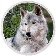 Timber Wolf Round Beach Towel