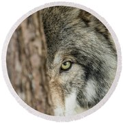 Timber Wolf Picture - Tw285 Round Beach Towel