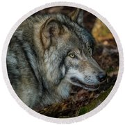 Timber Wolf Picture - Tw417 Round Beach Towel