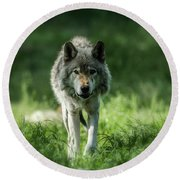 Timber Wolf Picture - Tw69 Round Beach Towel