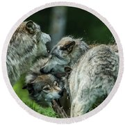 Timber Wolf Picture - Tw70 Round Beach Towel