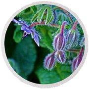Tiny Blue Flower On A Bush At Pilgrim Place In Claremont-california  Round Beach Towel