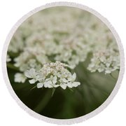 Tiny Cluster Of Queen Anne's Lace Round Beach Towel
