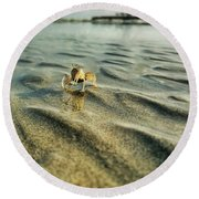 Tiny Crab In Water Round Beach Towel