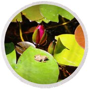 Tiny Frog Round Beach Towel