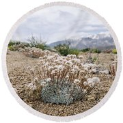 Tiny Mountain Blooms Round Beach Towel by Margaret Pitcher