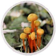 Tiny Orange Mushrooms Round Beach Towel