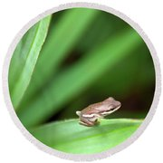 Tiny Tree Frog 01110 Round Beach Towel