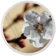 Tiny White Flower Round Beach Towel