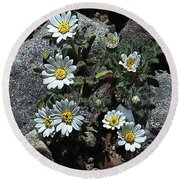 Tiny White Flowers In The Gravel Round Beach Towel