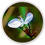 Tiny White Wildflower In Vicente Perez Rosales National Park Near Puerto Montt-chile  Round Beach Towel