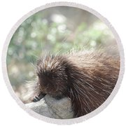 Tired Porcupine On A Fallen Log Round Beach Towel