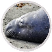 Tired Seal Round Beach Towel
