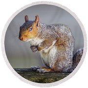 Tired Squirrel And Fly Round Beach Towel