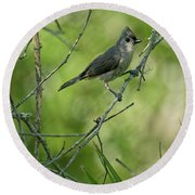 Titmouse In The Brush Round Beach Towel
