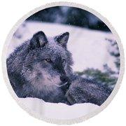 T.kitchin, 19552c Gray Wolf, Winter Round Beach Towel