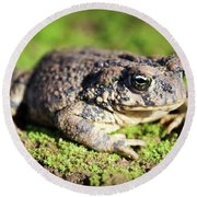 Toad You So Round Beach Towel