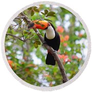 Toco Toucan Round Beach Towel