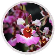 Tolumnia Pink Panther Orchid Round Beach Towel