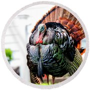 Male Turkey Round Beach Towel