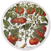 Tomato, 1613 Round Beach Towel