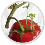 Tomato Seedlings Sprouting Round Beach Towel